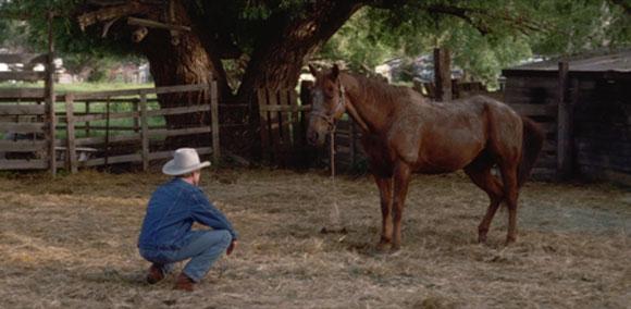 Horse Whisperer, Robert Redford, Top 10 Films,