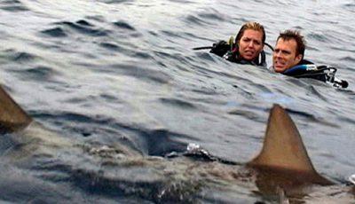 Open Water, sharks, horror, scary